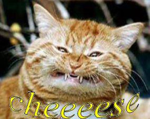 cheeeeesecat