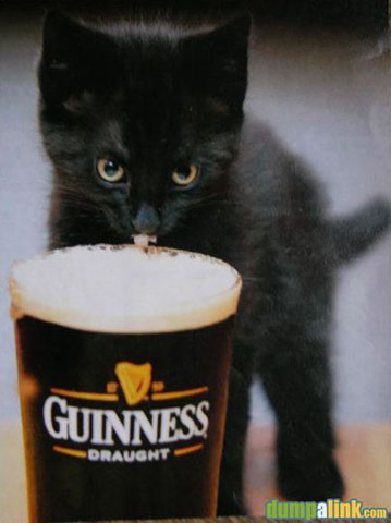 guinness-cat