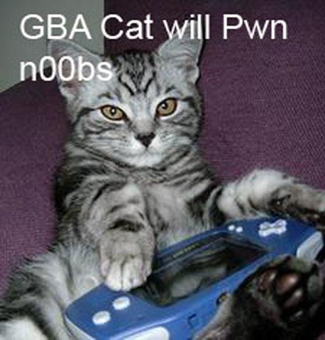 pwn-noobscat1
