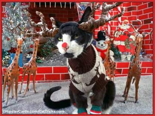 reindeercat1