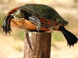 post-turtle